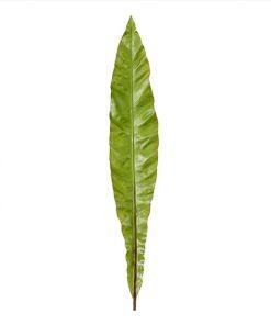 Folha Verde (CX6)